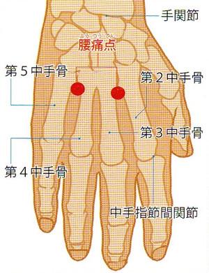 腰痛点(ようつうてん): 鍼一番のブログ